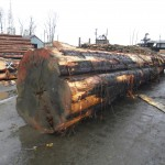 Clear - timber, log in yard